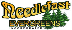 Needlefast Evergreens Logo